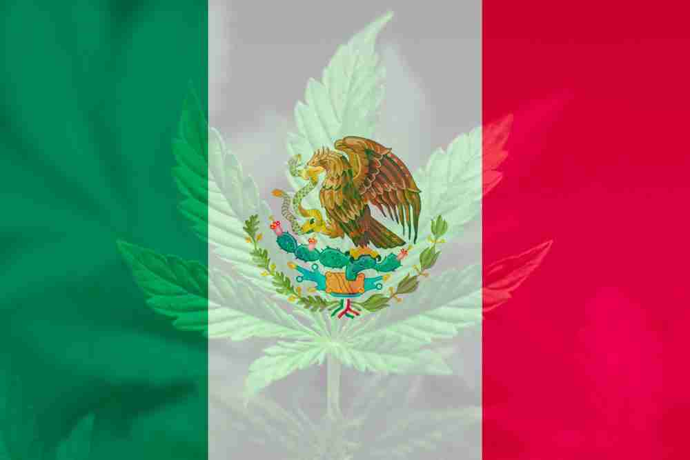 Mexicos-Supreme-Court-Legalizes-Cannabis-For-Recreational-Use.jpg