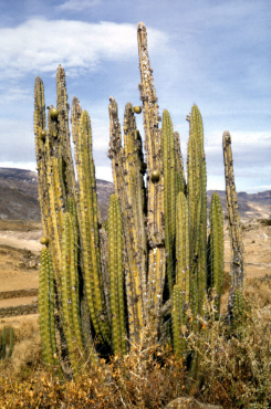 1687804637_cactus2.png.f9bedd31e3db70325be9fee7893e50be.png